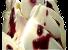 Joghurt Holunder